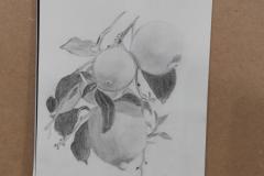 Rama de Limones - Ana